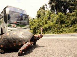 [Animais acidentados em rodovias serão atendidos na UFBA]
