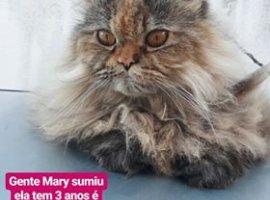 [Gata desaparecida em Camaçari é charmosa até no anúncio]