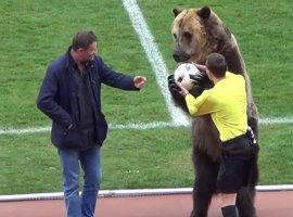 [Urso é usado para entregar bola a juiz na 3ª divisão russa e pode estar na Copa]