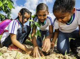 [Comunidades plantam mudas no Anel Florestal para celebrar o Meio Ambiente]