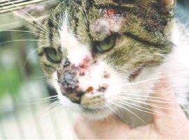 [Leitora pede às autoridades que tratem dos gatos com Esporotricose em Camaçari]