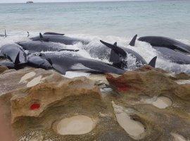 [Caça de baleias pode ser autorizada hoje após 32 anos de proibição]