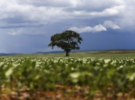 [Dia da Árvore: desmatamento vem caindo, mas ainda há desafios]