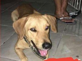 [Cãozinho Scooby está desaparecido em Camaçari]