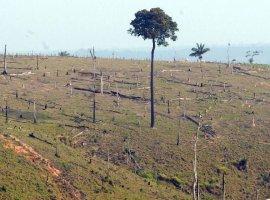 [Desmatamento na Amazônia aumenta 13,7% em um ano]