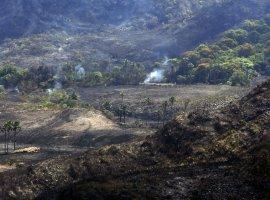 [Brasil atinge meta de redução de emissões de carbono na área florestal]