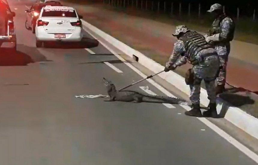 [Jacaré de 2 metros é capturado em Salvador; assista vídeo]