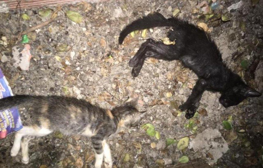 [Leitora denuncia envenenamento de gatos na Gleba E]