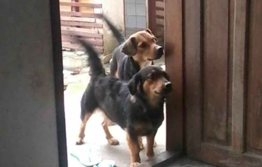 Dona procura por cadelas que fugiram na Gleba A