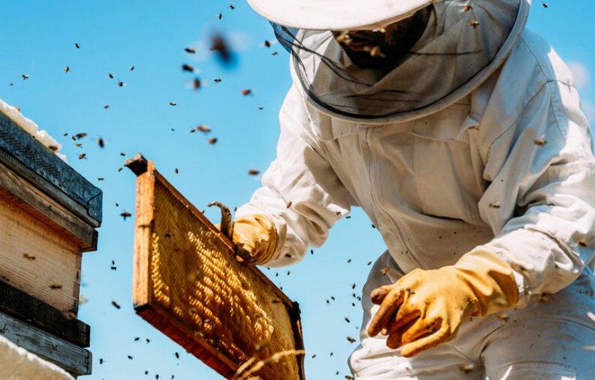 [10 alimentos que podem sumir com o fim das abelhas: chocolate, café, maçã e mais]