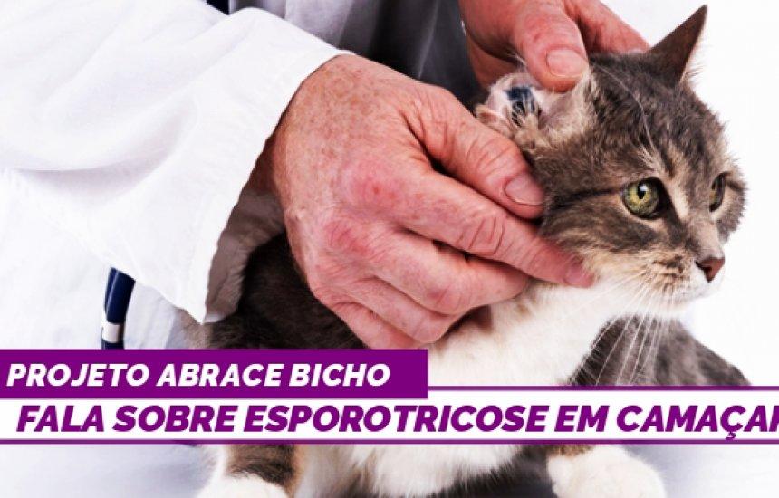 [Esporotricose: veterinária faz alertas e revela como lidar com a doença]