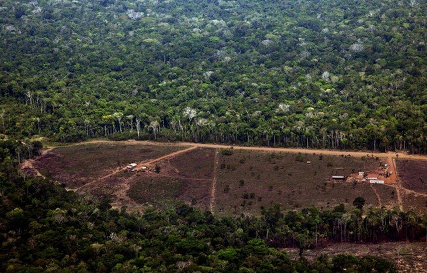 [Área com alerta de desmatamento na Amazônia cresce 278% em julho]