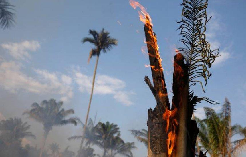 [Sem provas, Bolsonaro diz que ONGs podem estar por trás de queimadas]