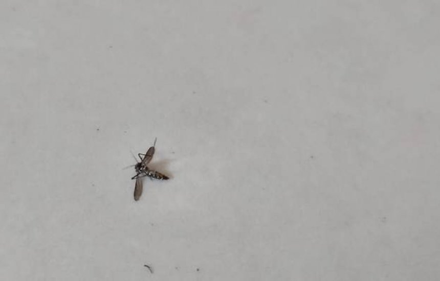 [Leitor alerta para risco de dengue no Alto da Cruz]