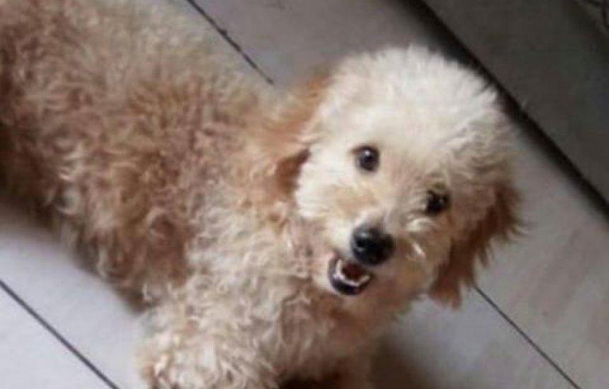 [Procura-se cãozinho desaparecido em Camaçari]