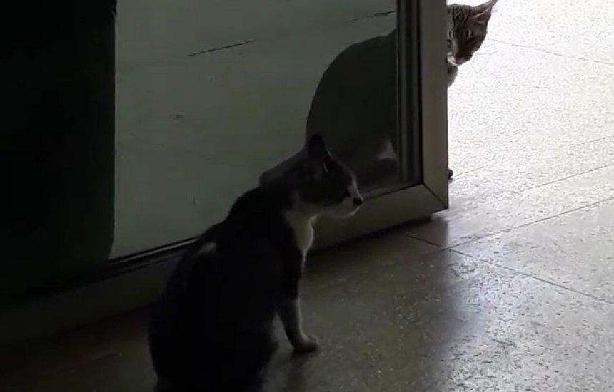 [Leitor denuncia presença de gatos no posto de saúde do Novo Horizonte]