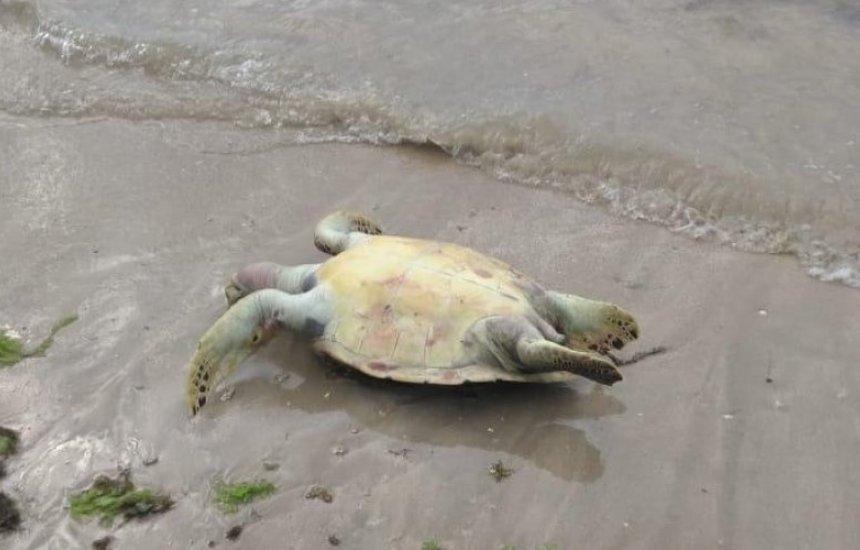 [Em 11 dias, oito tartarugas mortas são localizadas na Ilha de Itaparica]
