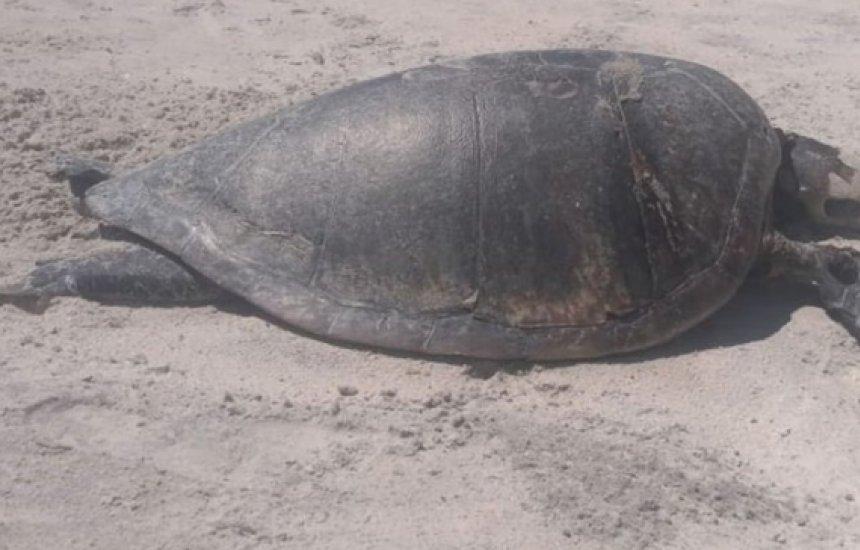 [Tartaruga é encontrada morta em praia de Ilhéus]