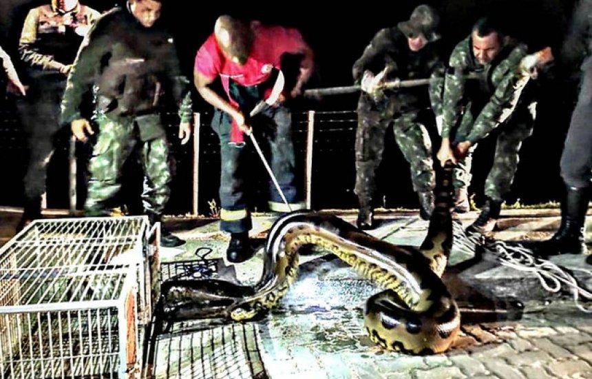 Cobra de sete metros é encontrada em represa frequentada por banhistas