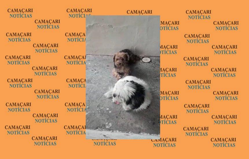 Dois cães estão perdidos em escola na Gleba C