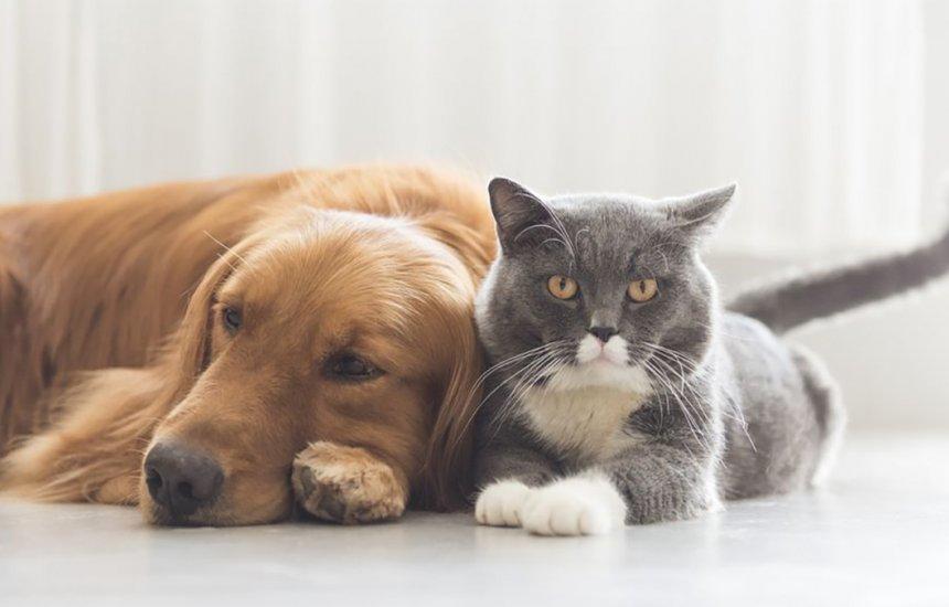[Sesau inicia processo de cadastramento para castração de cães e gatos]