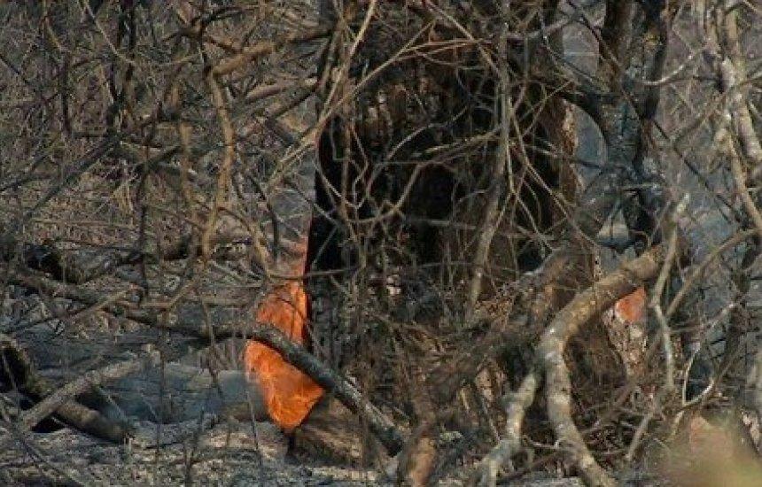 Senadores aprovam convite para Salles prestar esclarecimentos sobre incêndios no Pantanal