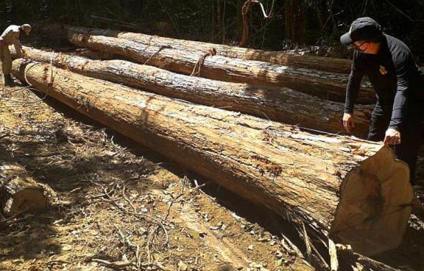 [Documentos mostram que Ibama facilitou exportação de madeira extraída ilegalmente]