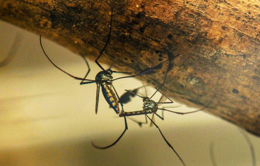 [Além da Covid, Salvador liga alerta para dengue, zika e chikungunya]