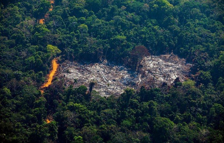 [Amazônia já possui regiões que emitem mais gás carbônico do que absorvem]