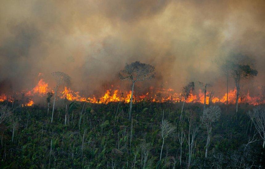 [Amazônia registra quase 5 mil focos de queimadas em julho mesmo com decreto que proíbe o uso do fogo]