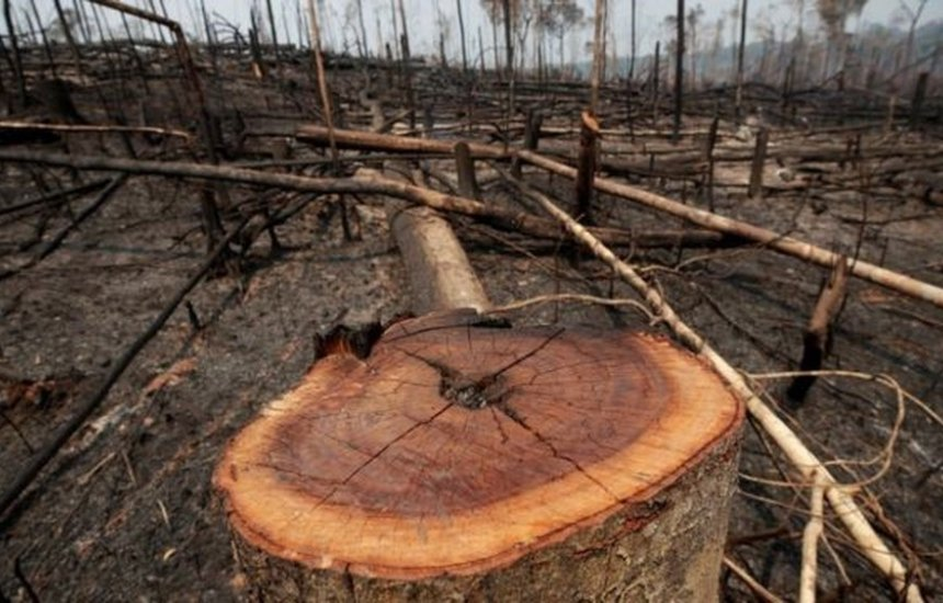 [Alertas de desmatamento: Amazônia tem 2ª pior temporada em 5 anos, diz Inpe]
