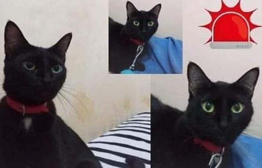 [Tutora procura por gata desaparecida na Avenida Sul]