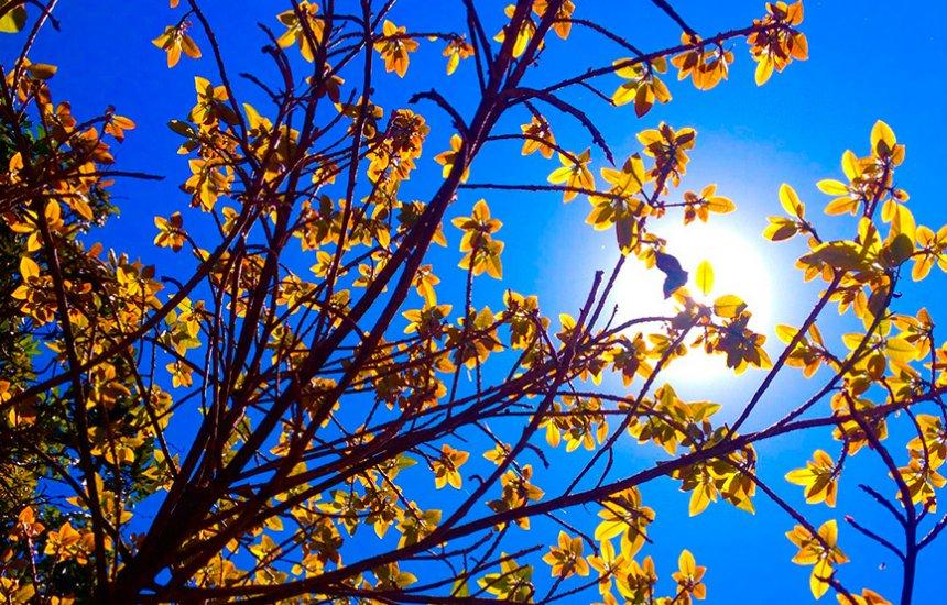 [Chegada da primavera causa mudança de tempo na Bahia]